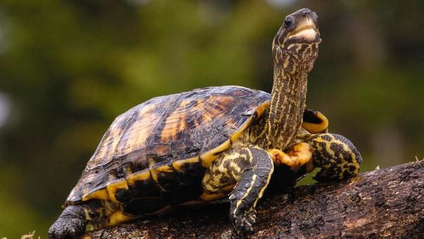 Что символизирует черепаха в гадании? Разбираемся