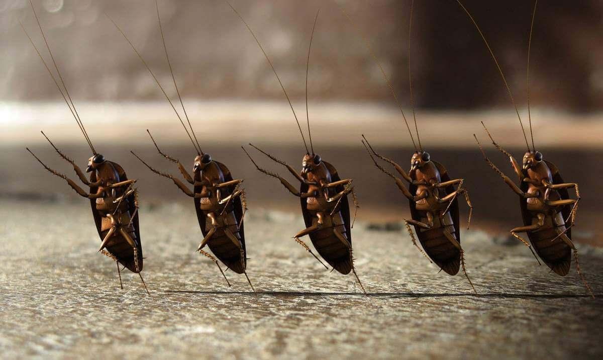 Тараканы во сне - к чему это.