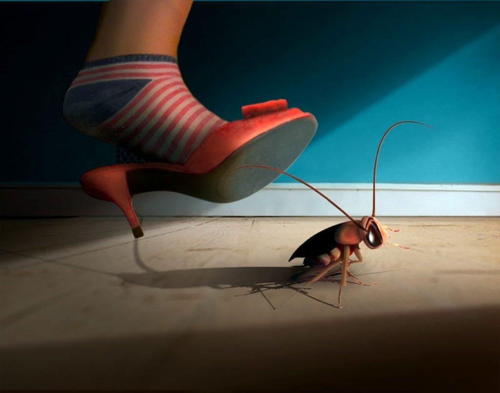 К чему снится давить таракана во сне.
