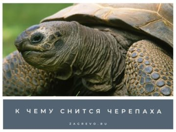 черепаха к чему снится