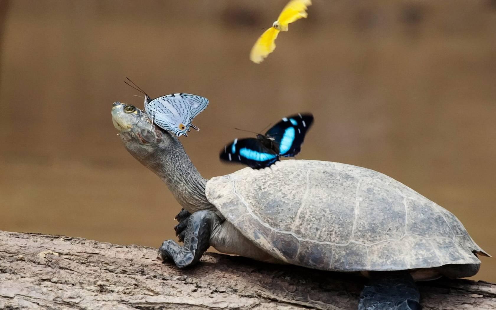Что сулит черепаха во сне.